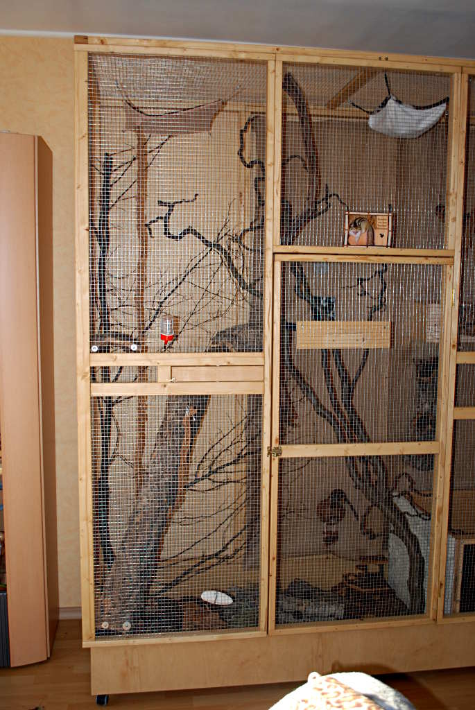 sammy ist umgezogen streifenh rnchen k fig einrichtung haustierforum online. Black Bedroom Furniture Sets. Home Design Ideas